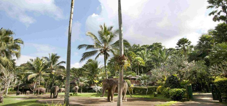 Bali Elephant Park1