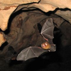 Bat Caves User Photo