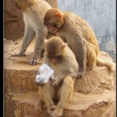 원저우 동물원 여행 사진
