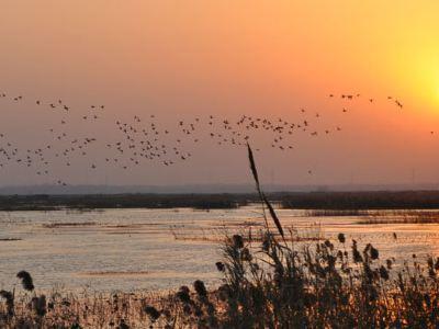 泗洪洪澤湖濕地