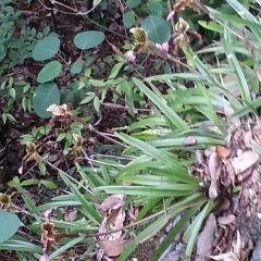 黃猄洞天坑國家森林公園用戶圖片
