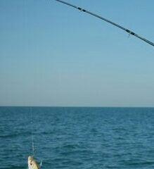 Dubai Sea Fishing User Photo