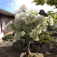 Dr. Sun Yat-Sen Classical Chinese Garden User Photo
