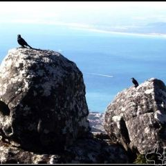 羅本島用戶圖片