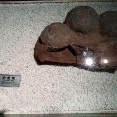Nature Museum User Photo