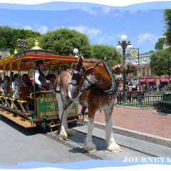 Disneyland Park User Photo