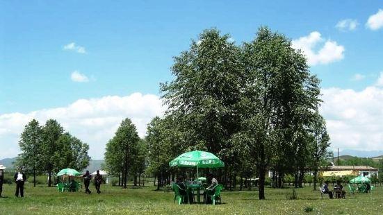 合作森林公園
