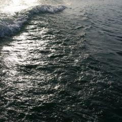 觀音島用戶圖片
