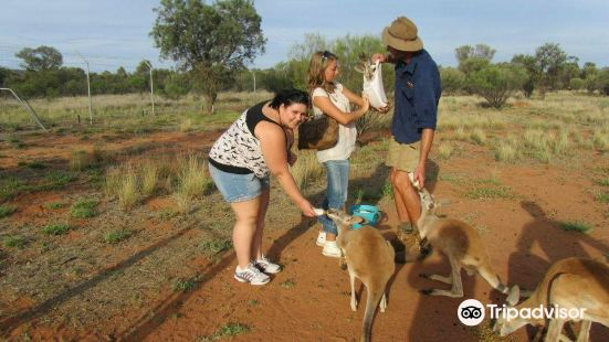 The Kangaroo Sanctuary