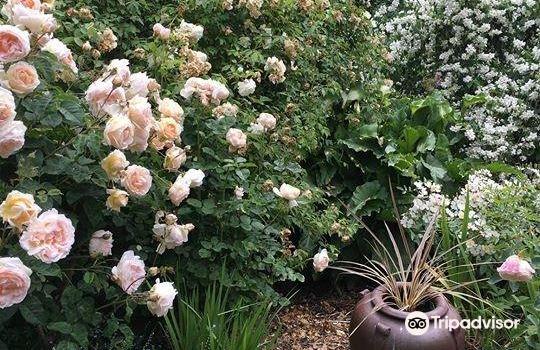Rosedown Gardens1