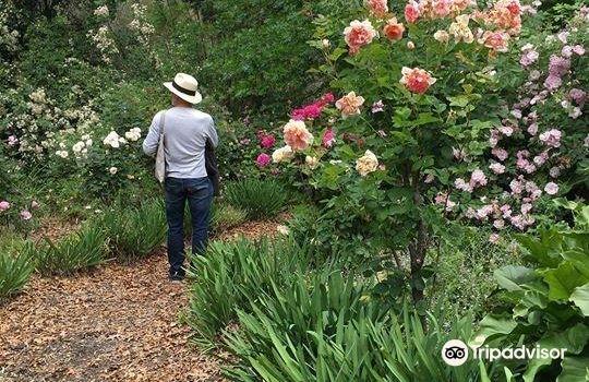 Rosedown Gardens2