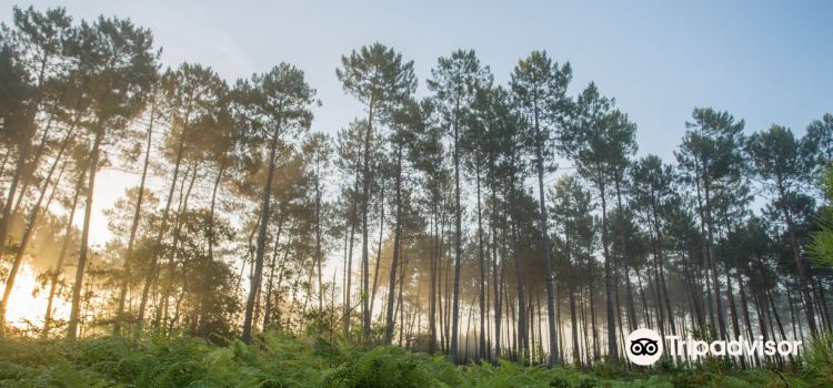 Landes de Gascogne Regional Natural Park1