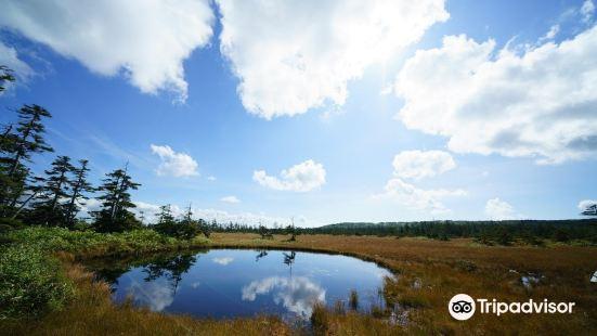 Matsuyama Wetland