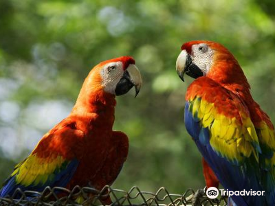 Macaw Recovery Network - Formerly The Ara Project