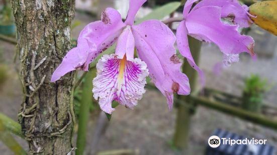 Otún Quimbaya國家公園