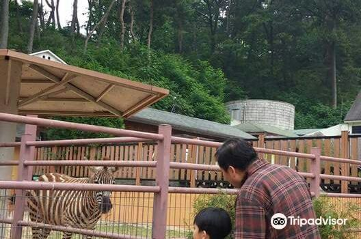 Cheongju Zoo 청주동물원3