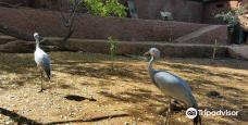 Hartbeespoort Dam - Snake and Animal Park-哈特比斯普特