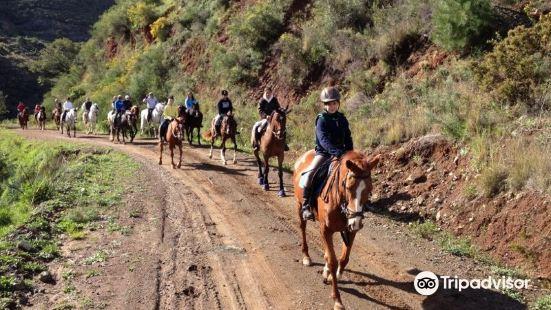 Arrocha Equitacion