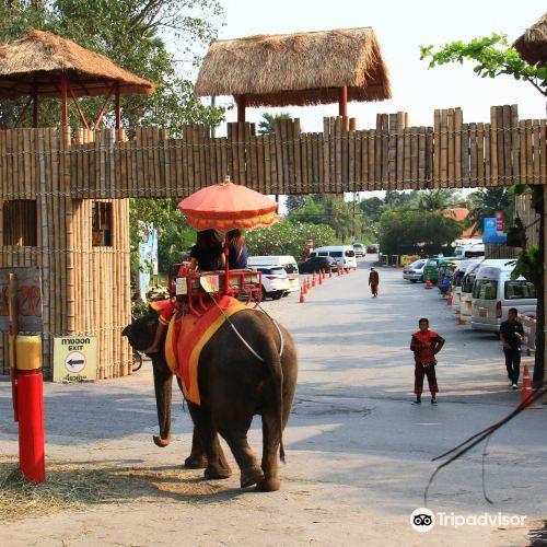 Ayothaya Elephant Village