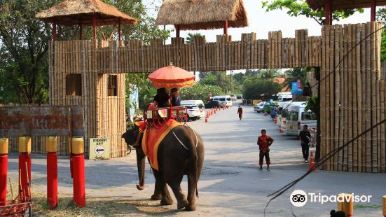 Ayothaya Elephant Village