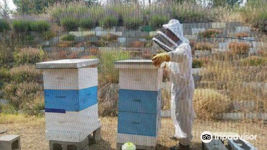 Arlo's Honey Farm