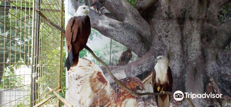 Rainforest Park Cebu3