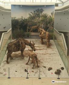 West Coast Fossil Park-萨尔达尼亚