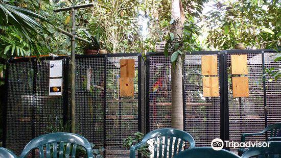 Nancy Forrester's Secret Garden
