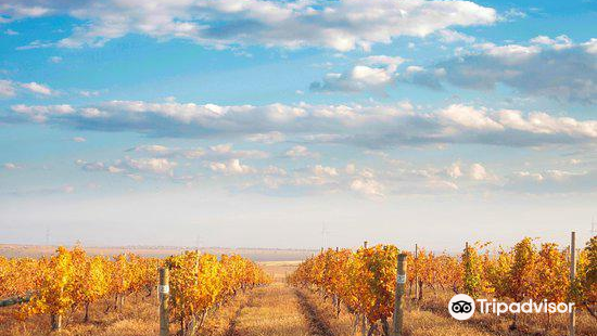 Van Ardi Winery
