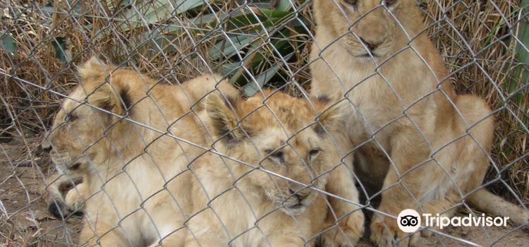El Paraiso Zoo (Zoologico El Paraiso)1