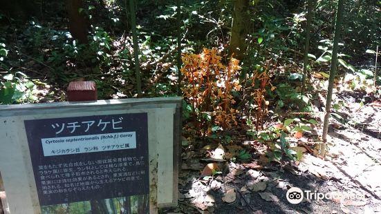京都大學醫學部