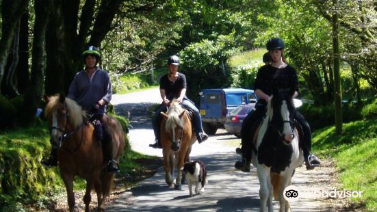 Tor Royal Riding Stables Dartmoor - Plymouth