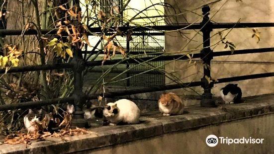 Cristina Garden
