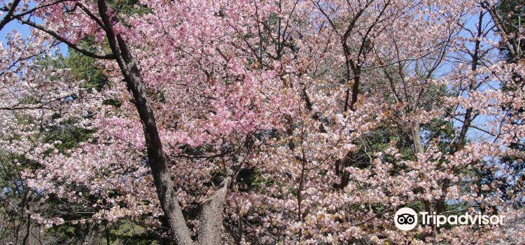Maruyama Cemetery3