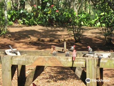 珀迪澳洲堅果農場