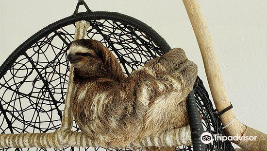 Aviarios del Caribe Sloth Sanctuary