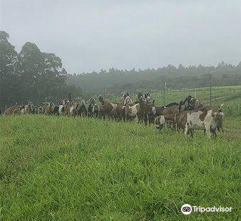 Honomu Goat Dairy