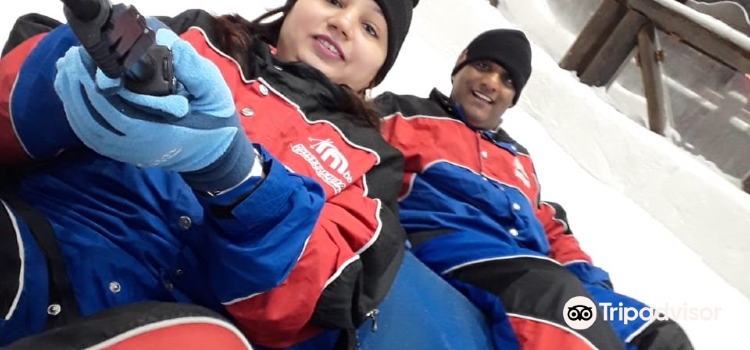 Snow Penguins at Ski Dubai1