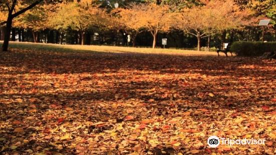 도립 린시노모리 공원
