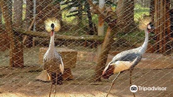 內羅畢教育中心 - 動物孤兒院