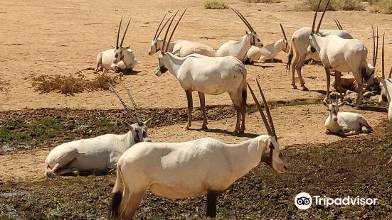 Shaumari Nature Reserve