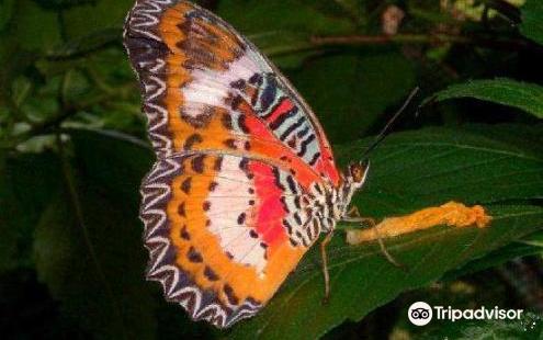 Boracay Butterfly Garden