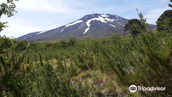 Reserva Nacional Malalcahuello